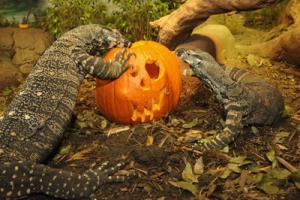 boo-zoo-lizards